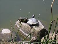 2 Turtles
