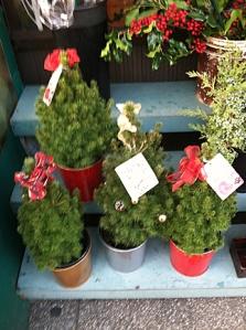 Baby Christmas Trees