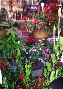 Red Christmas Cactus (top)