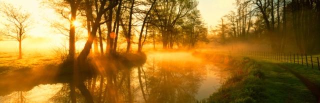 sunrise+trees