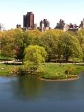 Pond and Skyline