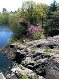 Redbud by Pond