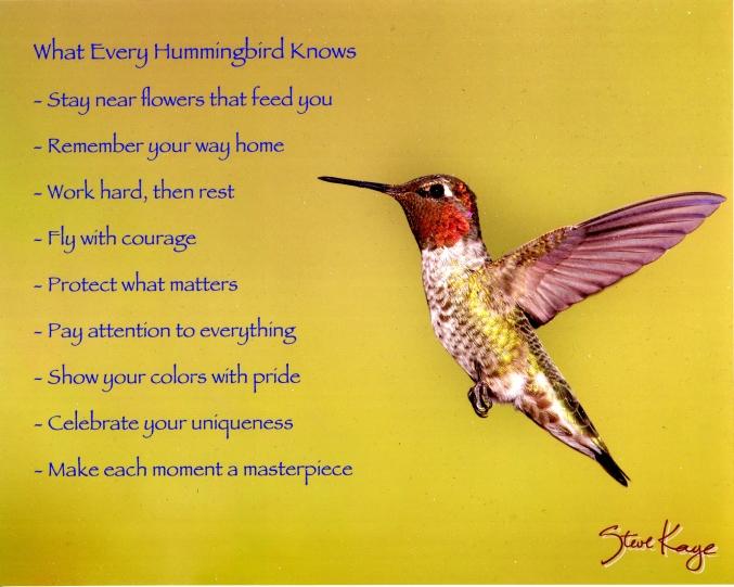 SteveKayeHummingbird