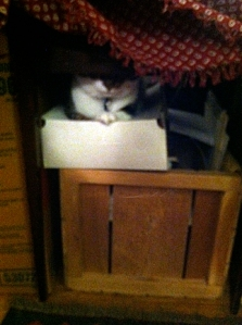 Cat-in-a-box2