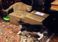 MeowingBox2