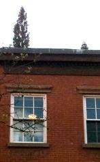 Cedar on Roof