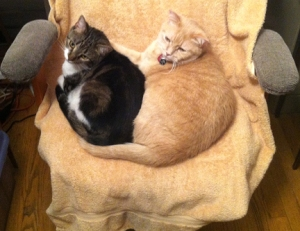 2 Cats on My Chair