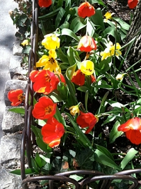 3-Tulips+Bars