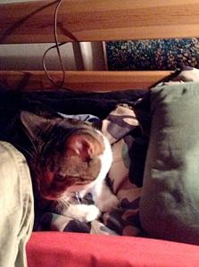 Lola burrows