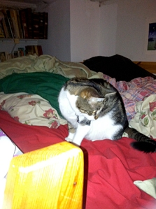 Lola on bed! (Note: the yellow thing in the lower left corner is the top of the ladder).