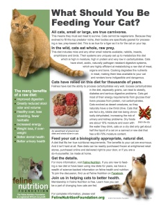 What_Should_You_Be_Feeding_Your_Cat