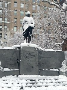 Snowy-hatted Admiral F.
